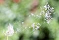 Blown dandelions (Løvetann på vei inn i stua).jpg