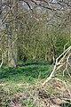 Bluebells in Berners Wood - geograph.org.uk - 401433.jpg