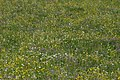 Blumenwiese Gnalp 2 – WAF 300 J FL.jpg