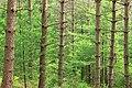 Bob Webber Trail (7) (14599215562).jpg