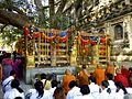Bodhi Tree Maha Bodhi Temple Bodh Gaya India - panoramio (1).jpg