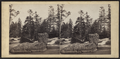 Bogg River, from Robert N. Dennis collection of stereoscopic views.png
