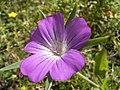 Bolderik 26-08-2005 12.40.56.JPG