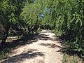 Boquillas Crossing Trail 2.JPG