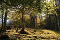 Bosc a Era Artiga de Lin.jpg