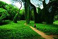 Bosque de La Habana 09.jpg