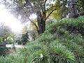 Botanička bašta Jevremovac 007.JPG