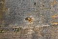 Boulet mur Beynac.jpg