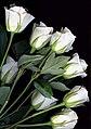 Bouquet (1223938781).jpg