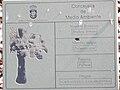 Brahea armata PlacaInfo 2010-10-26 ArboretoParqueElPilarCiudadReal.jpg