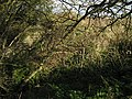 Bridge buttress - geograph.org.uk - 1034147.jpg