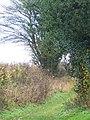 Bridleway, Axford - geograph.org.uk - 1635225.jpg