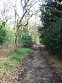 Bridleway Through Dorking Wood - geograph.org.uk - 779140.jpg
