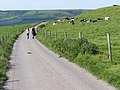 Bridleway northwest of Ashley Chase Dairy - geograph.org.uk - 179342.jpg