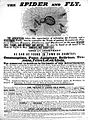 Broadsheet; The Spider and Fly Wellcome L0008387.jpg