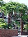 BrownUniversity-GradCenterD.jpg
