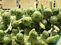 Brussels sprouts on the stalk closeup.jpg