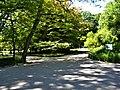 Bucuresti, Romania. GRADINA BOTANICA. Doua alei in parc. (B-II-a-B-18508).jpg