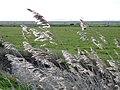 Burgh Castle marshes - geograph.org.uk - 287238.jpg