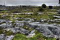 Burren (8058371031) (2).jpg