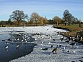 Bushy Park in winter - geograph.org.uk - 1690415.jpg