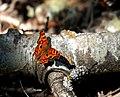 Butterfly Rest (220869582).jpg