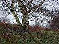 By a birch tree - geograph.org.uk - 1622053.jpg