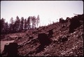 CLEAR CUT AND BURNT-OVER AREA - NARA - 542865.tif