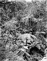 COLLECTIE TROPENMUSEUM Boomvarens in het bos op de vulkaan Tangkubanprahu TMnr 10027519.jpg