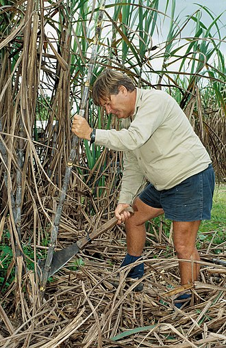 Feluga, Queensland - Cutting sugarcane, Feluga, 2007