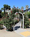 California State Capitol Park World Peace Rose Garden 2.jpg