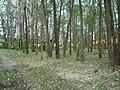 Camping Parque Curumim - panoramio - jkern (6).jpg