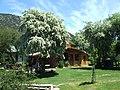 Camping en Los Cohiues, Bariloche - panoramio.jpg