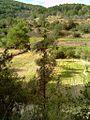 Camps llaurats vistos des del vessant del puig d'en Toni Gat - panoramio.jpg