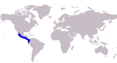 Carangoides otrynter distribution.png