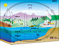 Carbon cycle-cute diagram-zh-Hans.jpeg