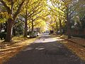 Carillon neighborhood, Fall.jpg