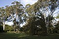 Caringbah South NSW 2229, Australia - panoramio (7).jpg