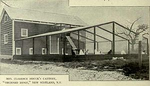 New Scotland, New York - Clarence Houck's Cattery - New Scotland, NY