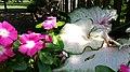 Chadwick Arboretum and Learning Gardens (36165799530).jpg