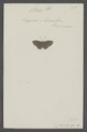 Charis - Print - Iconographia Zoologica - Special Collections University of Amsterdam - UBAINV0274 049 20 0083.tif