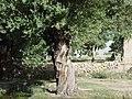 Cheshme rasoul 1 - panoramio.jpg