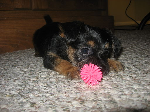 Chewy Puppy How To Prevent Your Dog From Guarding Objects