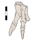 Chilesaurus right hand.png