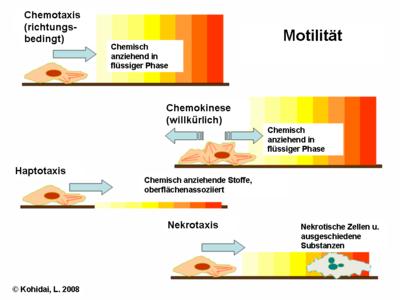 Hauptarten der chemotaktischen Reaktionen