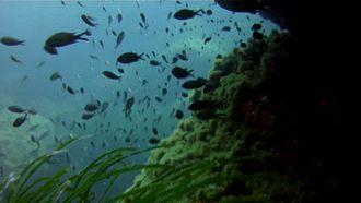 Mellieħa - Ċirkewwa is a popular dive site
