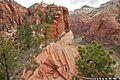 Climbing up to Angels Landing (Zion National Park) (3443203403).jpg