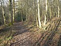 Colgate, Blindman's wood - geograph.org.uk - 646880.jpg