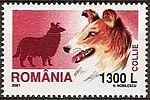 Collie-Canis-lupus-familiaris Romania 2005.jpg