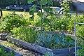 Community Garden Fotor 34 (71237029).jpeg